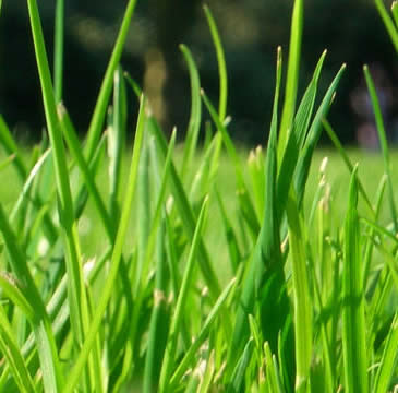 Local Area Landscaper Fertilizing Grass Services near Royal Oak, Birmingham and Troy MI