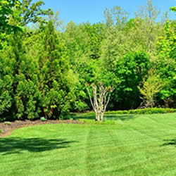 Lawn Aerating Services for Beautiful Lawns near me in Royal Oak, Birmington, and Troy MI