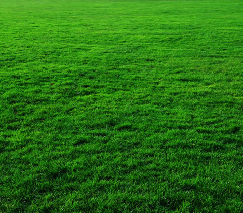 Lawn Fertilization and Grass Fertilizing Specialists Royal Oak MI