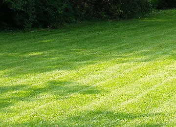 Local Area Lawn Mowing Company near me in Royal Oak, Birmington, and Troy MI