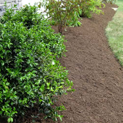 Mulch Installation for Flower Beds and Tree Areas near me in Royal Oak, Birmington, and Troy MI